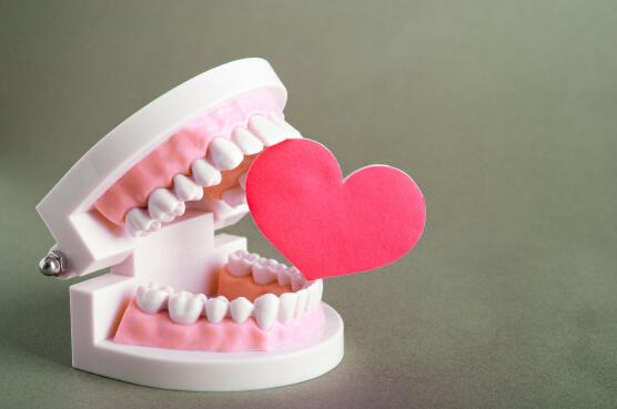Модель челюстей